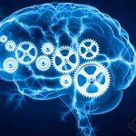 مغز هنگام یادگیری مهارت تازه چه تغییری میکند؟